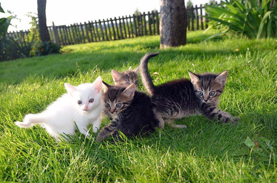 Haustiere, Katzen