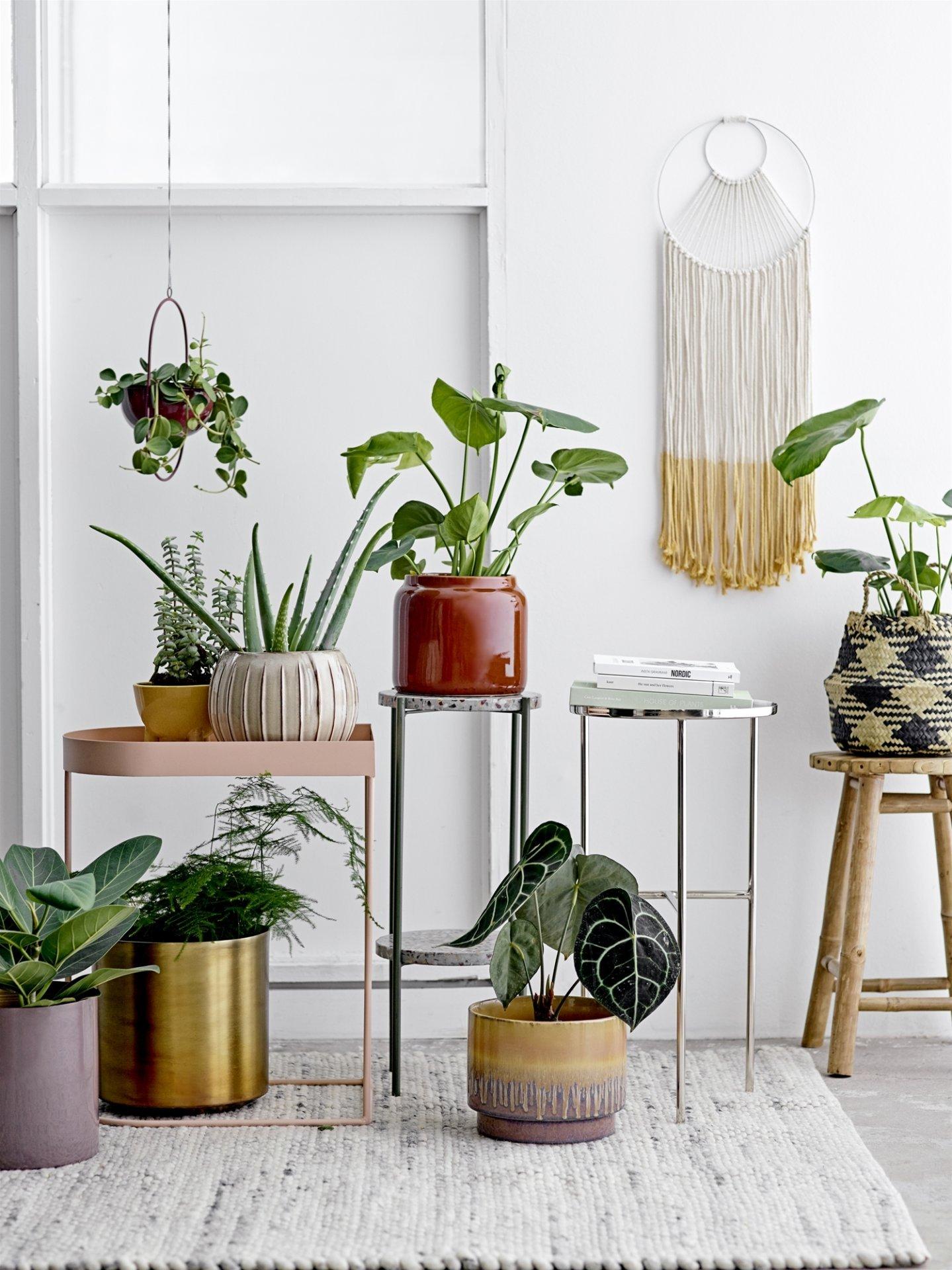Zimmerpflanzen in Gruppen