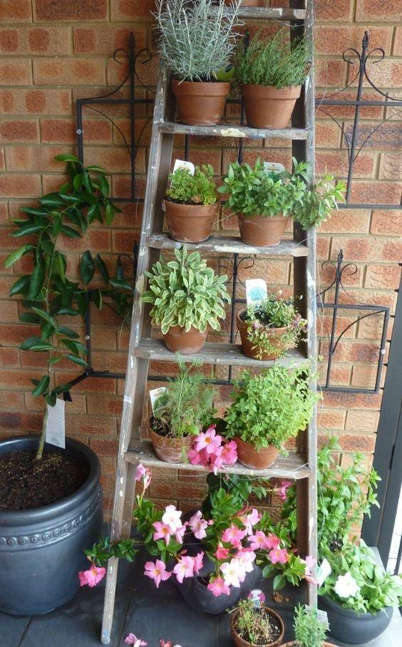 In die Höhe pflanzen