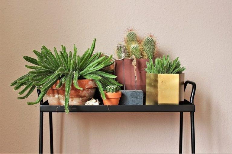 Urban Jungle - Pflanzen für Einsteiger