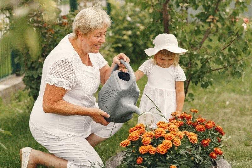 Protezione invernale per le piante